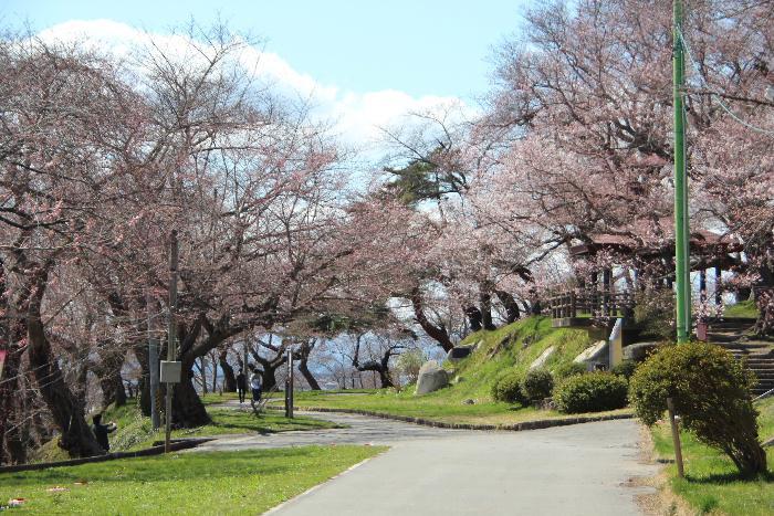 お天気は良かったのですが肌寒い感じのする一日でした 烏帽子山公園の桜が開花したとの情報で公園に登ってみました 桜はまだ咲き始めで見ごろになるまでもう少しかかりそうです もうちょっと待って下さい