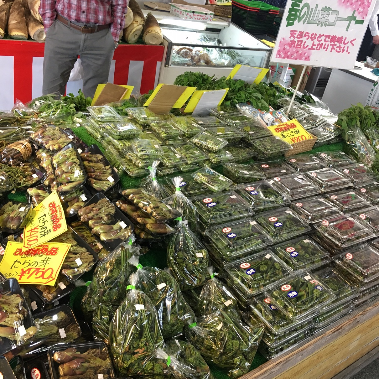 春の山菜コーナー!:画像
