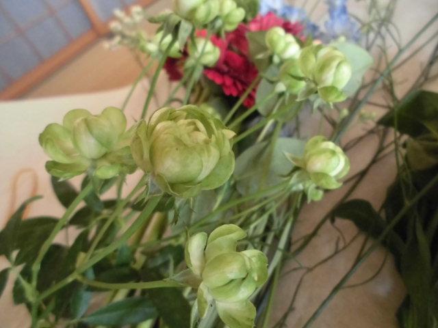 ★。★はじめて見た花達・・・美蔵
