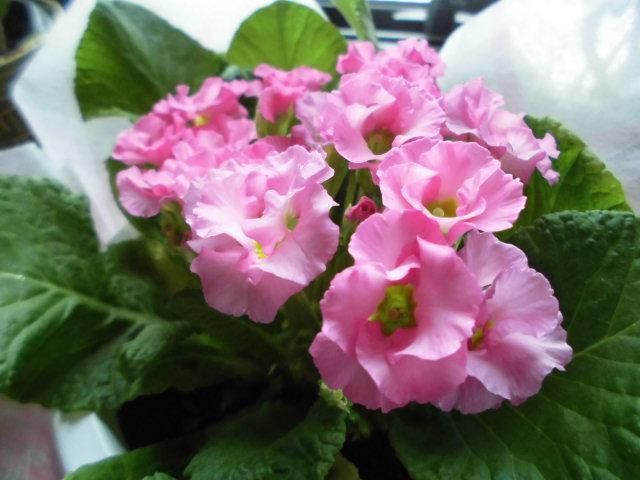 ★。★素敵なお花を頂きました・・・美蔵