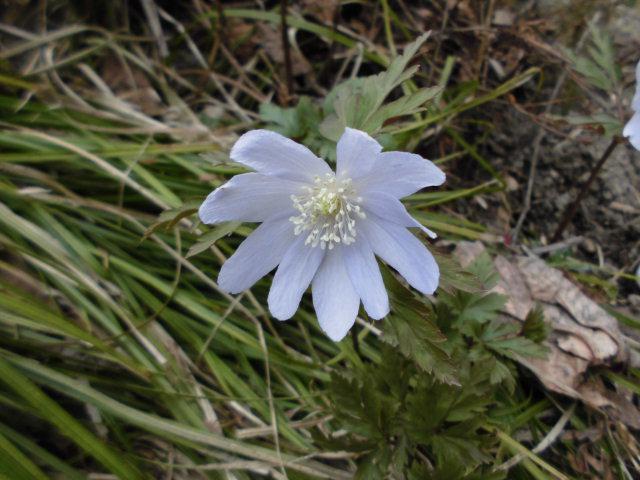 ★。★かわいい花見つけました・・・美蔵