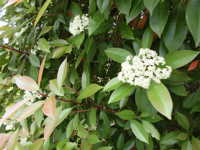★。★可愛い白い花・・・美蔵