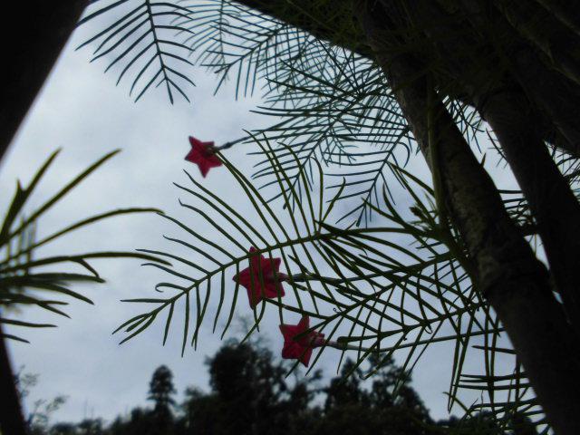 ★。★子供たちが植えてくれた花が咲きました・・・美蔵