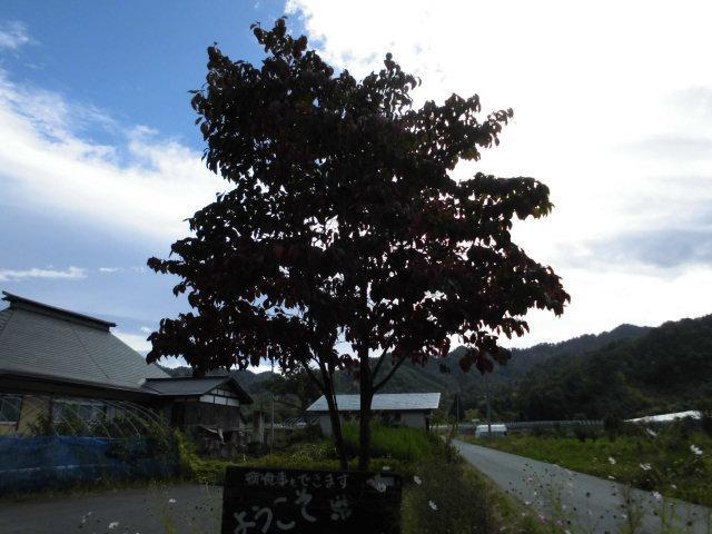 ★。★そろそろ、紅葉がはじまっております・・・美蔵