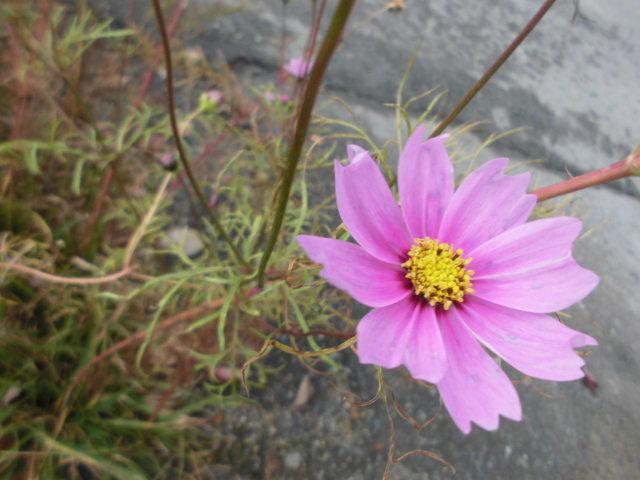 ★。★今年最後の咲きおさめ?・・・美蔵