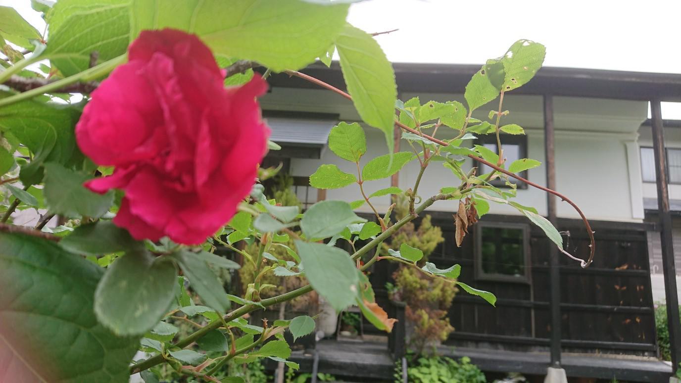 ★。★今月は、【薔薇】・・・美蔵