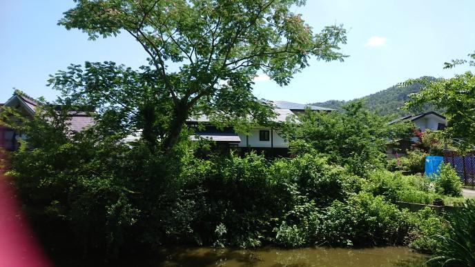 ★。★今週は【ねむの木】が見ごろです・・・美蔵