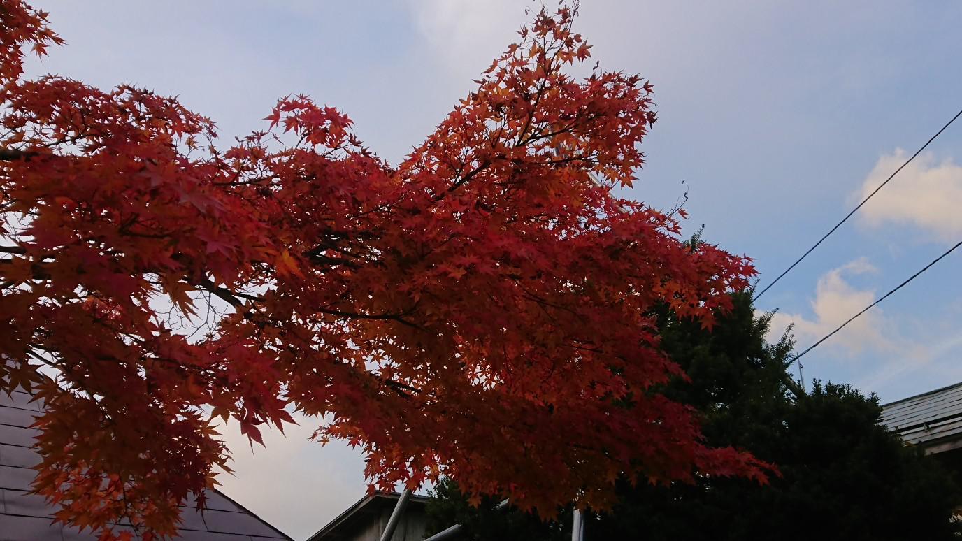 ★。★只今、もみじの紅葉がきれいです・・・美蔵