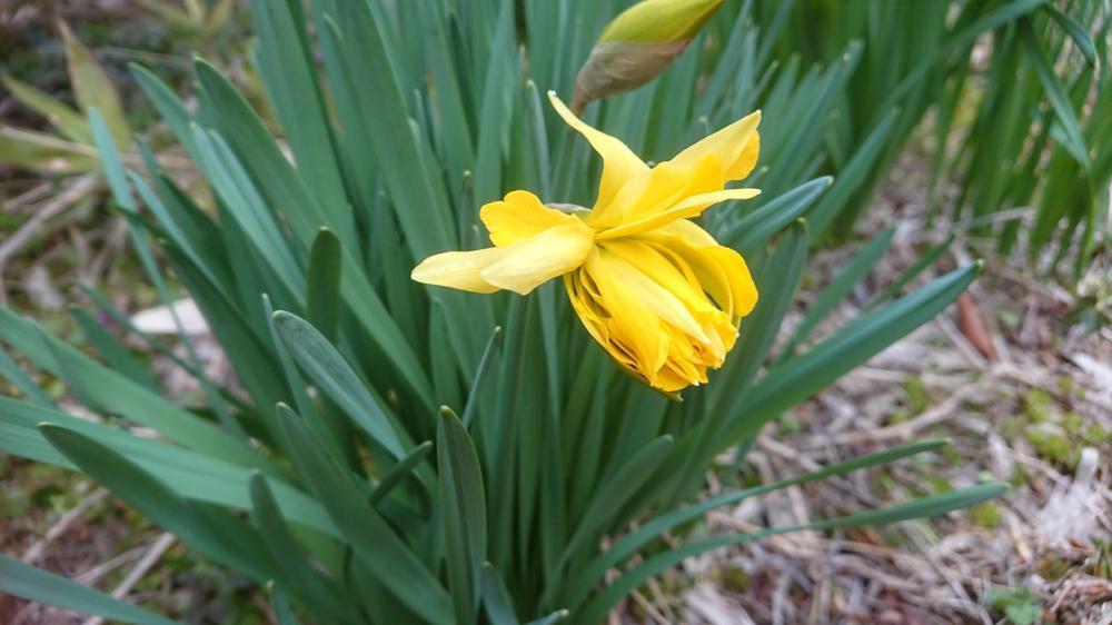 ★。★やっと お花が咲きました・・・美蔵