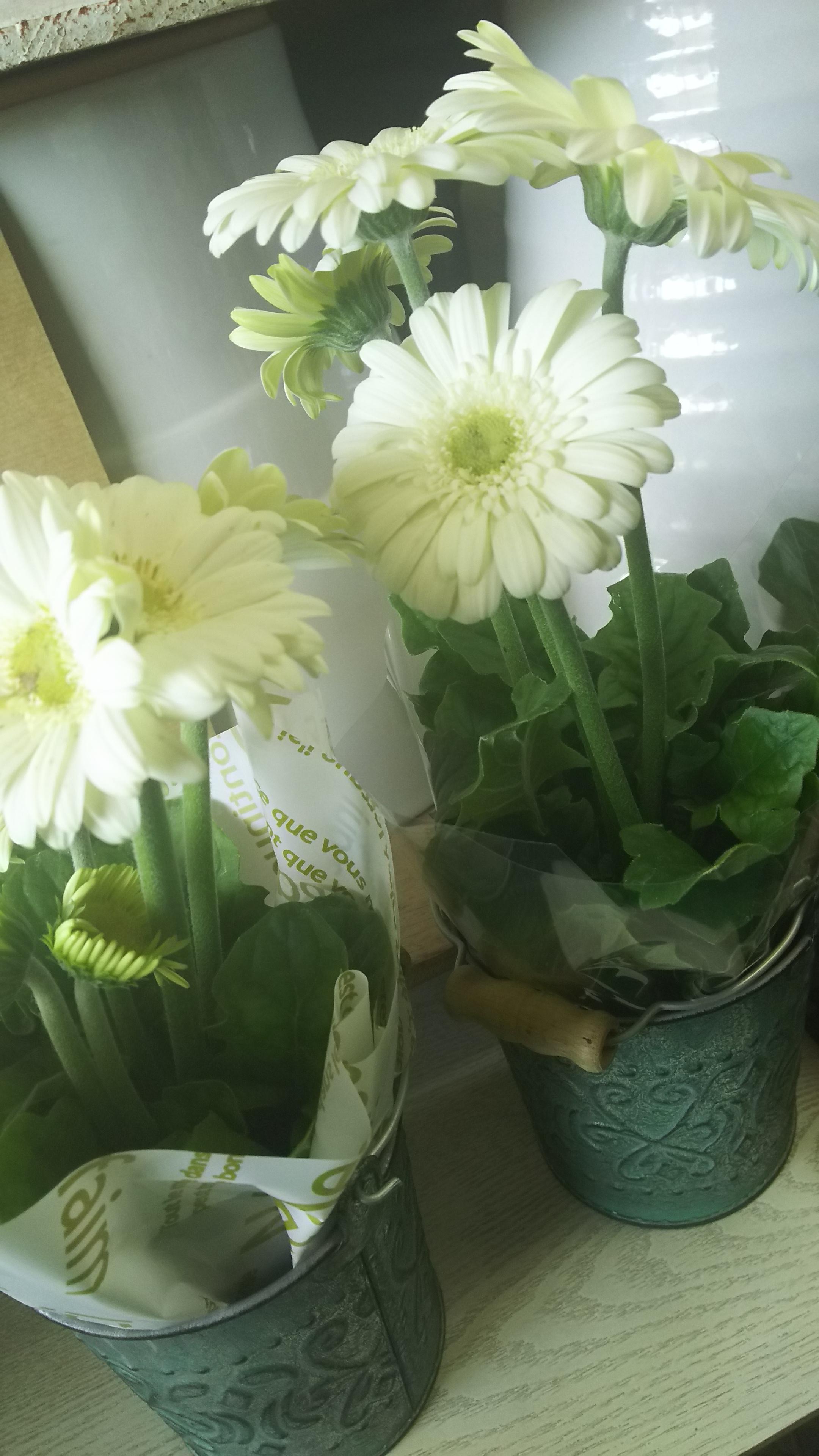 おはな。と。もっと。お花の鉢植え♪