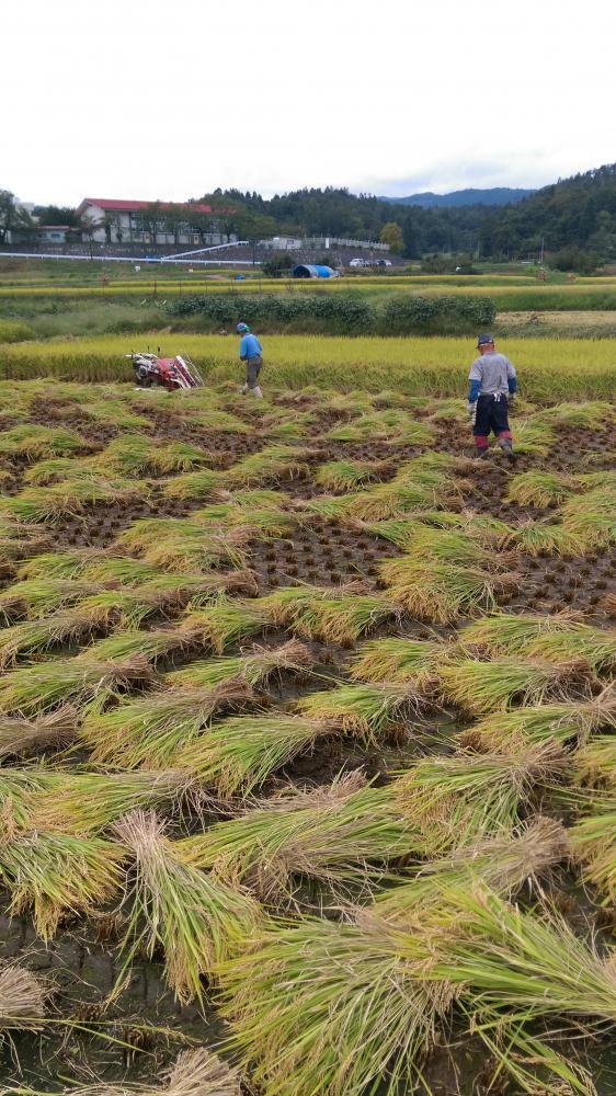 秘伝豆もぎ取りイベントと自然乾燥米イベント!