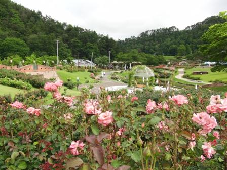 東沢バラ公園開花状況/