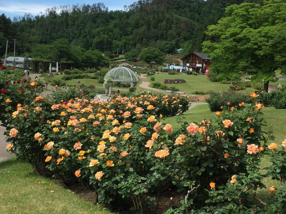6月6日 東沢バラ公園開花状況:やまがたへの旅/山形県観光情報 ...
