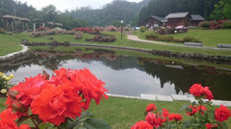 6月16日 東沢バラ公園開花状況