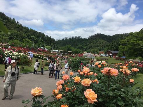 6月17日 東沢バラ公園開花状況