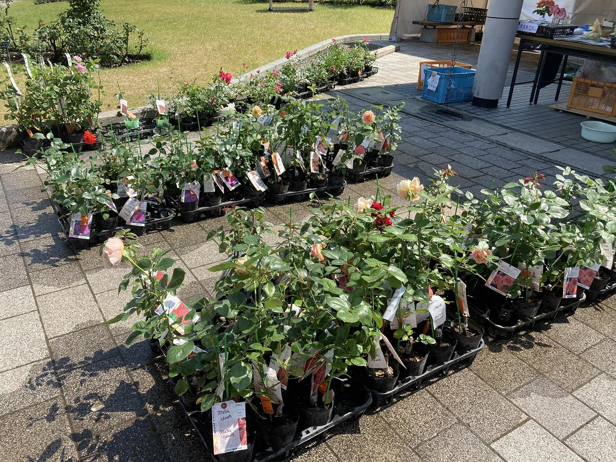6月15日東沢バラ公園開花状況