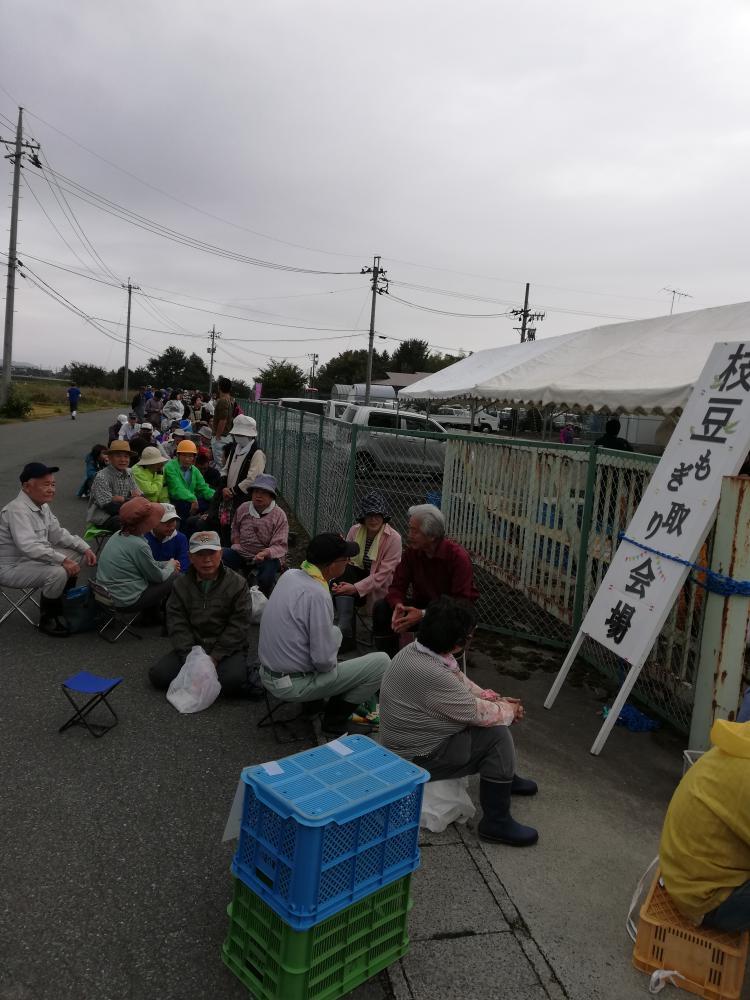 秘伝豆もぎ取りイベント開催します! :画像