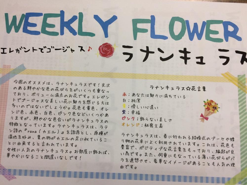 ウィークリーフラワー 今週のおすすめです! (^ ^)