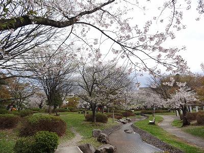 '13長井市内の桜開花情報(4月30日):やまがたへの旅/山形県 ...