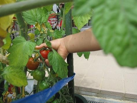 🥒野菜の収穫2🍅