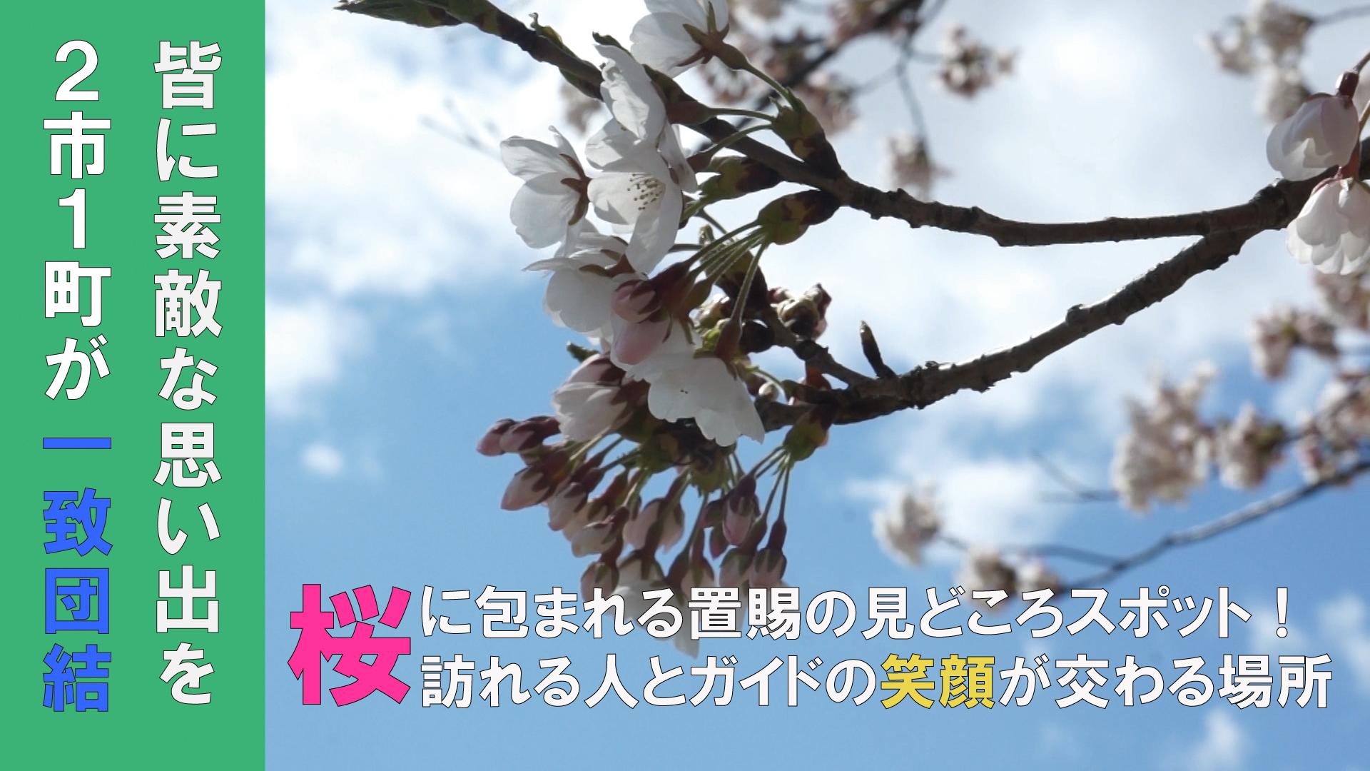 桜の下で華麗な舞を披露~ 置賜さくら回廊「花咲きイベント」~(H30.4.13):画像