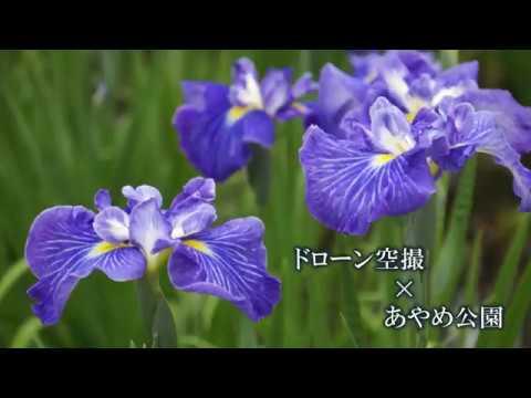 ドローン空撮×あやめ公園(山形県長井市):画像