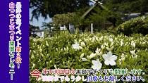 白つつじまつりオープニングセレモニー(令和元年5月11日):画像