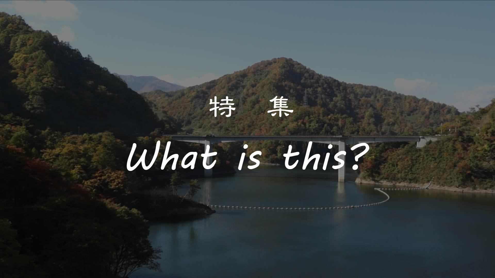 【長井市】 特集 『What is this?』 ながい百秋湖 編 :画像