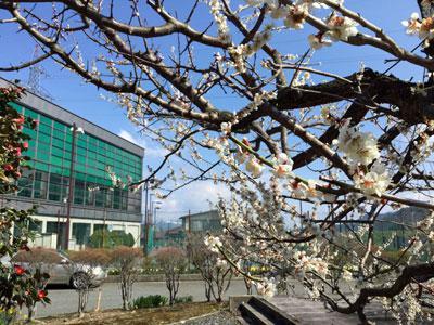 ☆春到来!