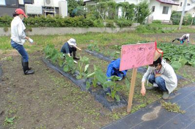 ☆食の安全安心事業 畑の楽耕~看板を設置しました!