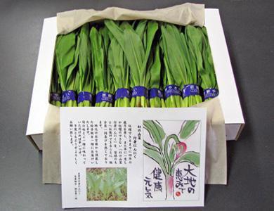 【幻の山菜!行者にんにく】