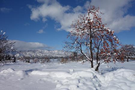 【雪の晴れ間に】:画像