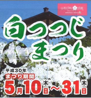 [white azalea Festival << notice >>] : Image