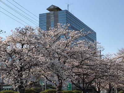 【春爛漫】