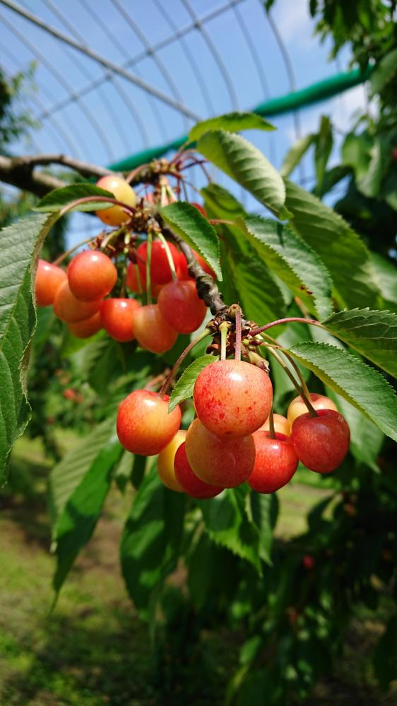 It is Nakano sightseeing orchard ~ Fruit' s caf�Rulave ~. : Image