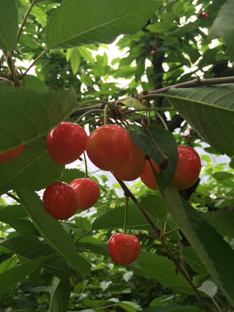 仲野観光果樹園 〜Fruit's café Rulave〜 でございます。
