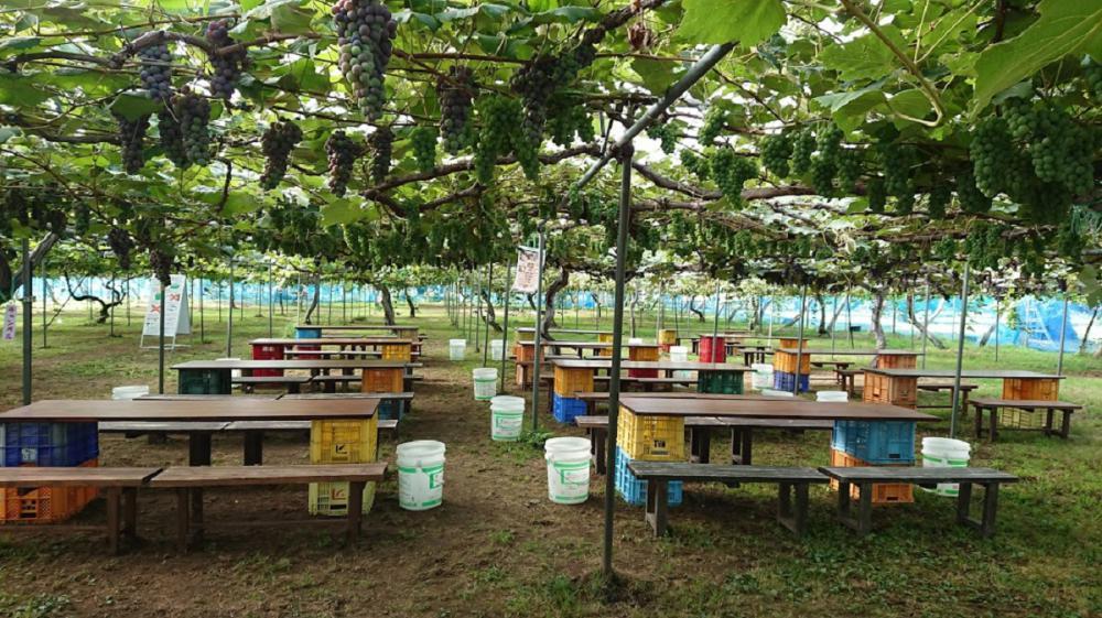 仲野観光果樹園 ~Fruit's caf? Rulave~ でございます。
