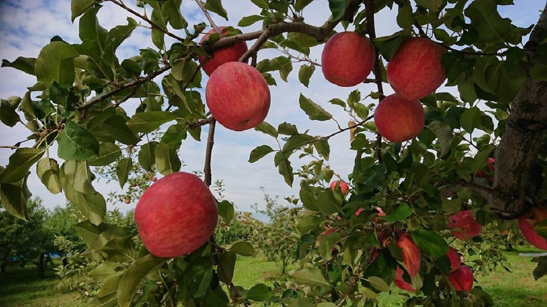 仲野観光果樹園 ~Fruit's cafe Rulave~ でございます。