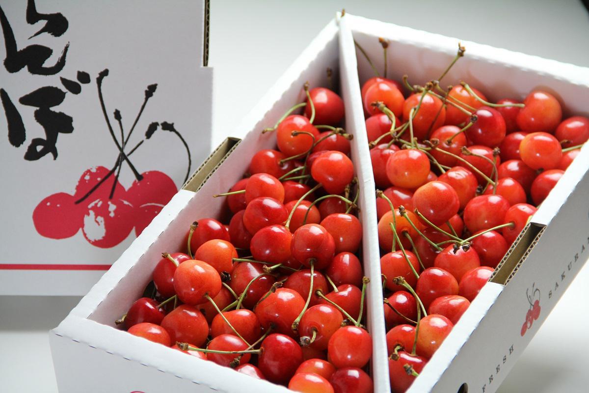 仲野観光果樹園でございます。初夏の味覚『さくらんぼ』のネット販売を開始しました!!