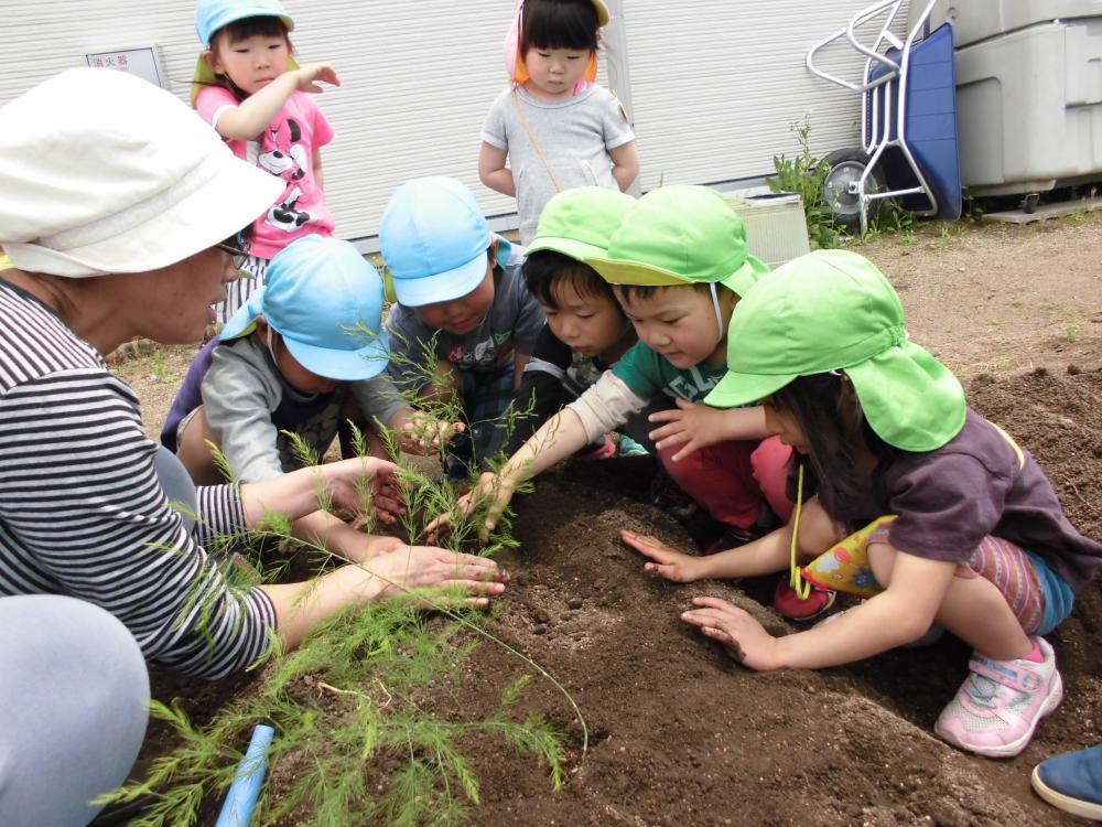 野菜の苗を植えたよ!