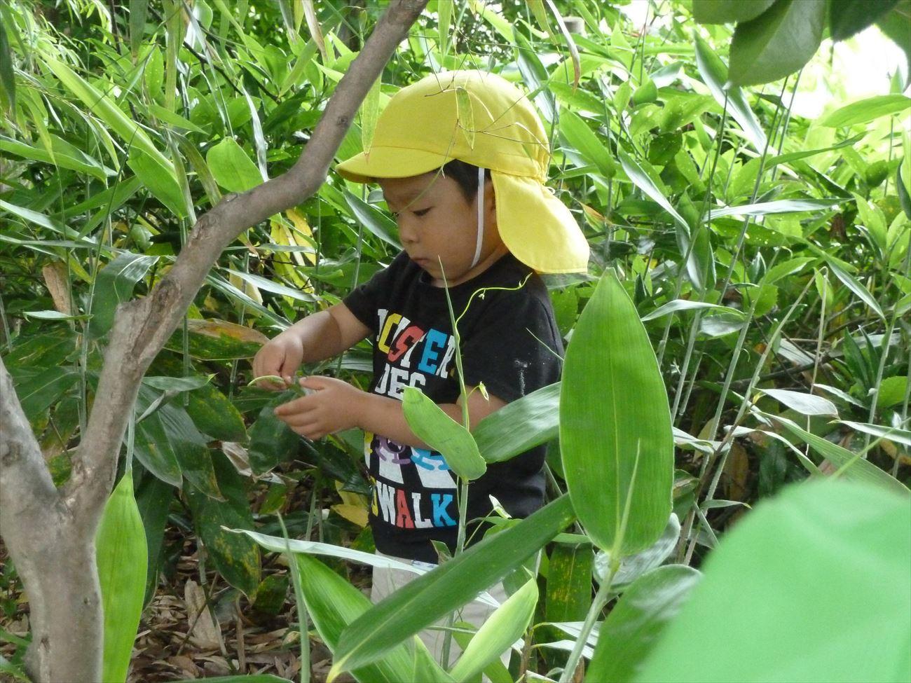 笹巻き作り{笹の葉取り」