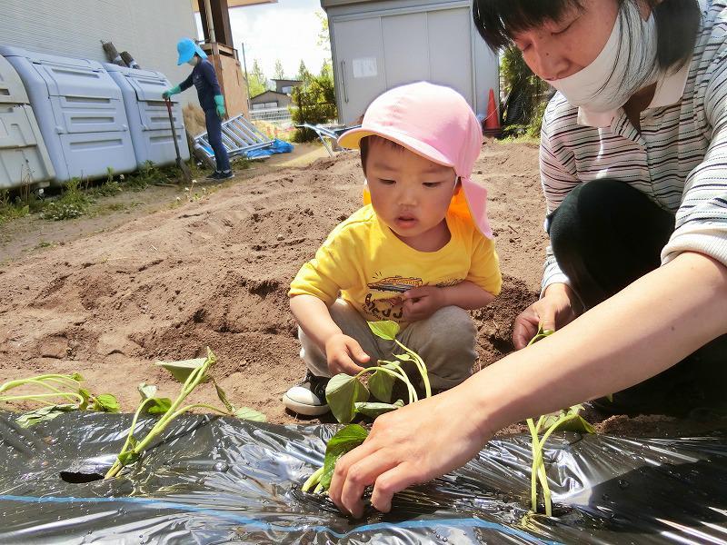 乳児さんの畑活動