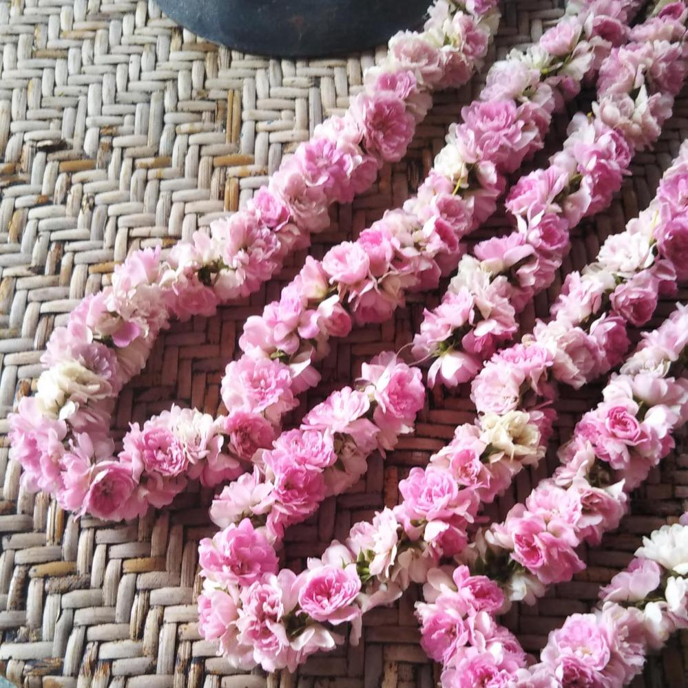 庭のミニつるバラのウエルカムレイ
