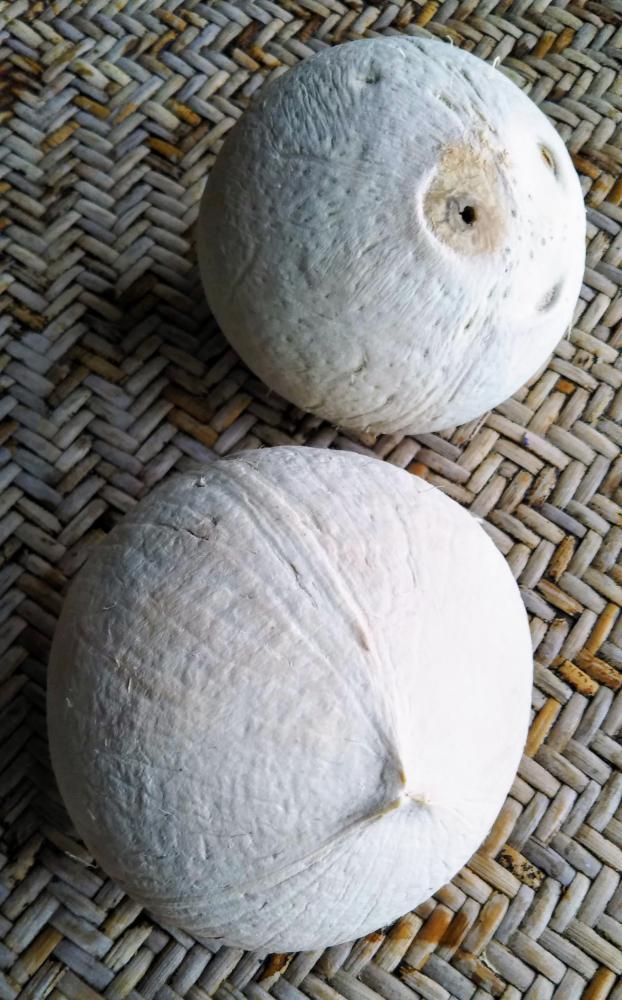 ココナッツで水分補給