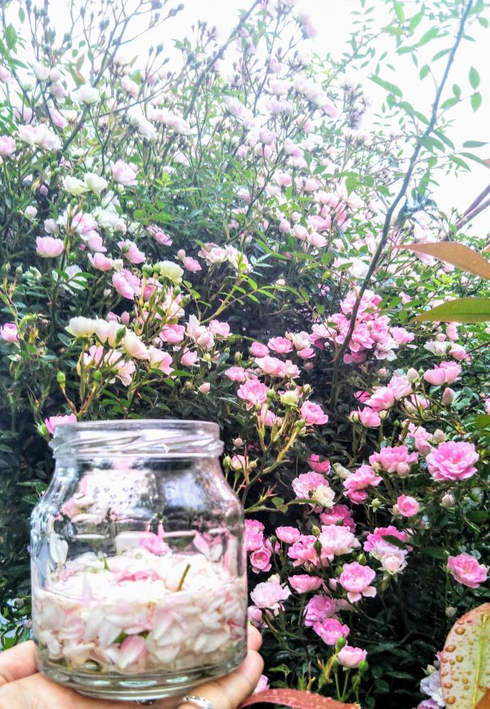 お庭のミニバラdeチンキつくり