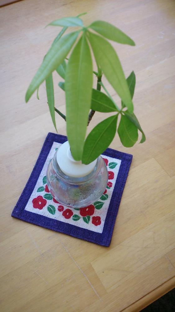 観葉植物 vol.2:画像