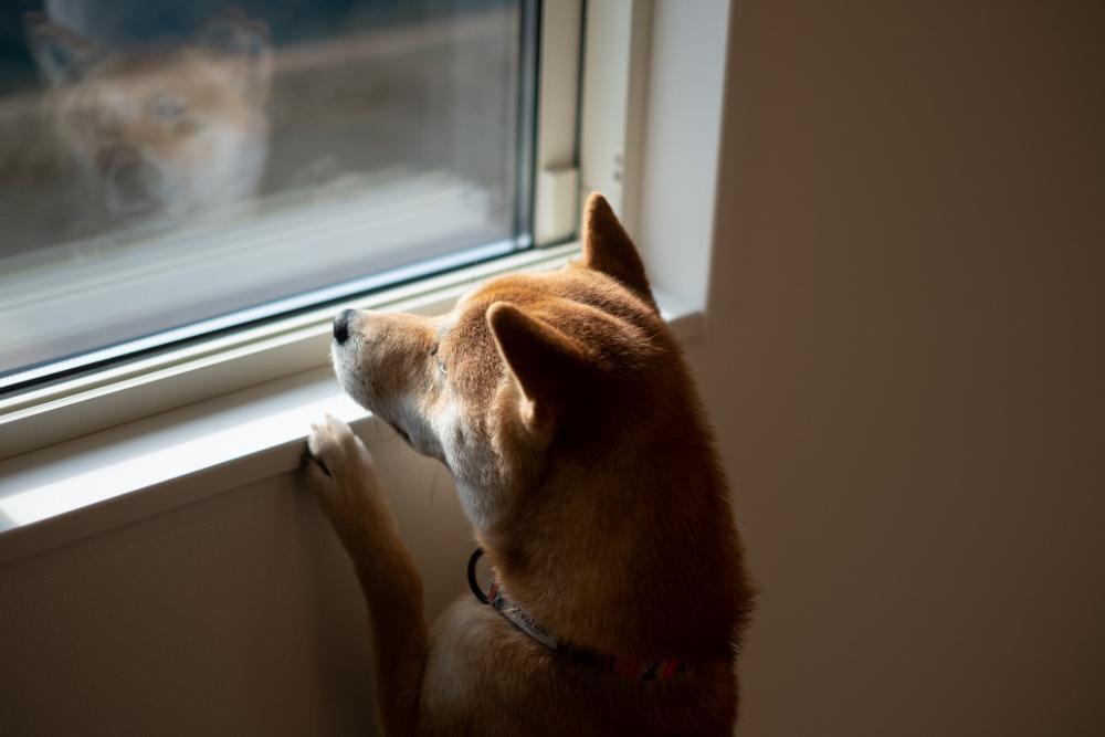 中山建売【With DOG】完成しました♪