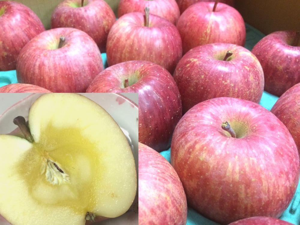 雪にあたったふじリンゴ販売開始:画像