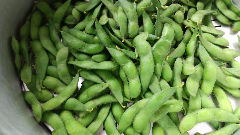 『金の枝豆』を1番美味しく食べる方法:画像