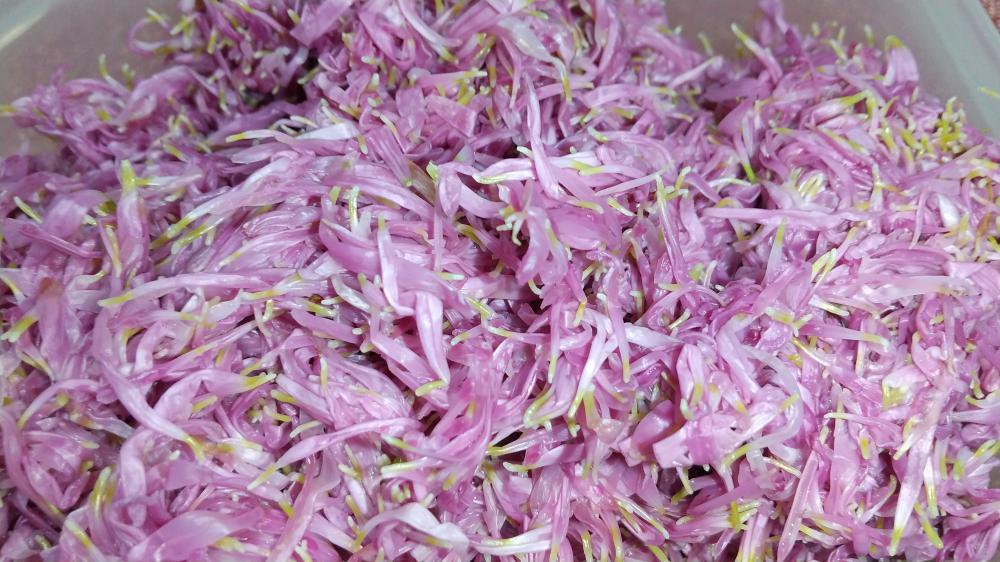 山の市場Cooking〜もって菊〜:画像